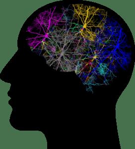 acetyl-l-carnitin-erfahrung-wirkung